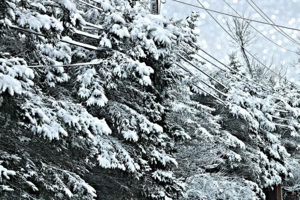storm-snow-2019-hinckley-ohio-power-lines-cold-blizzard-winter