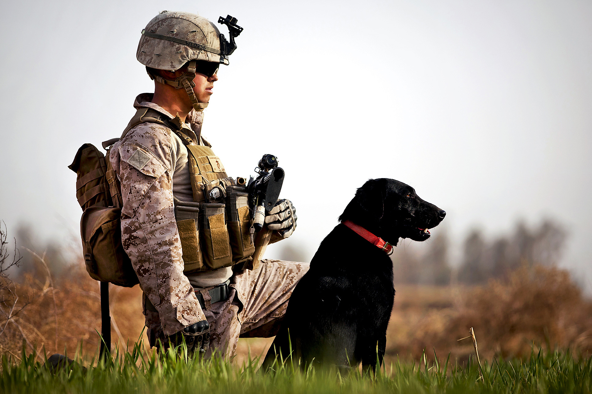 COMMON BARRIERS VETERANS EXPERIENCE AND HOW DOGS CAN HELP