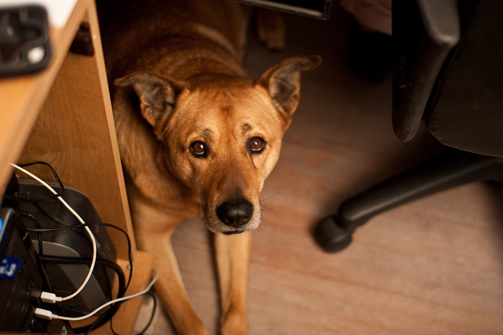 The Top Five Benefits of a Dog-Friendly Workplace
